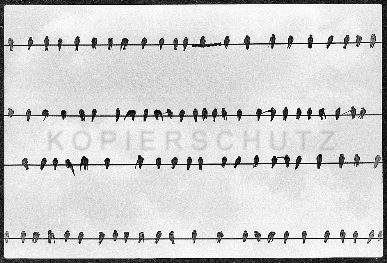 Nr13-049_Hiddensee-3.8.1994